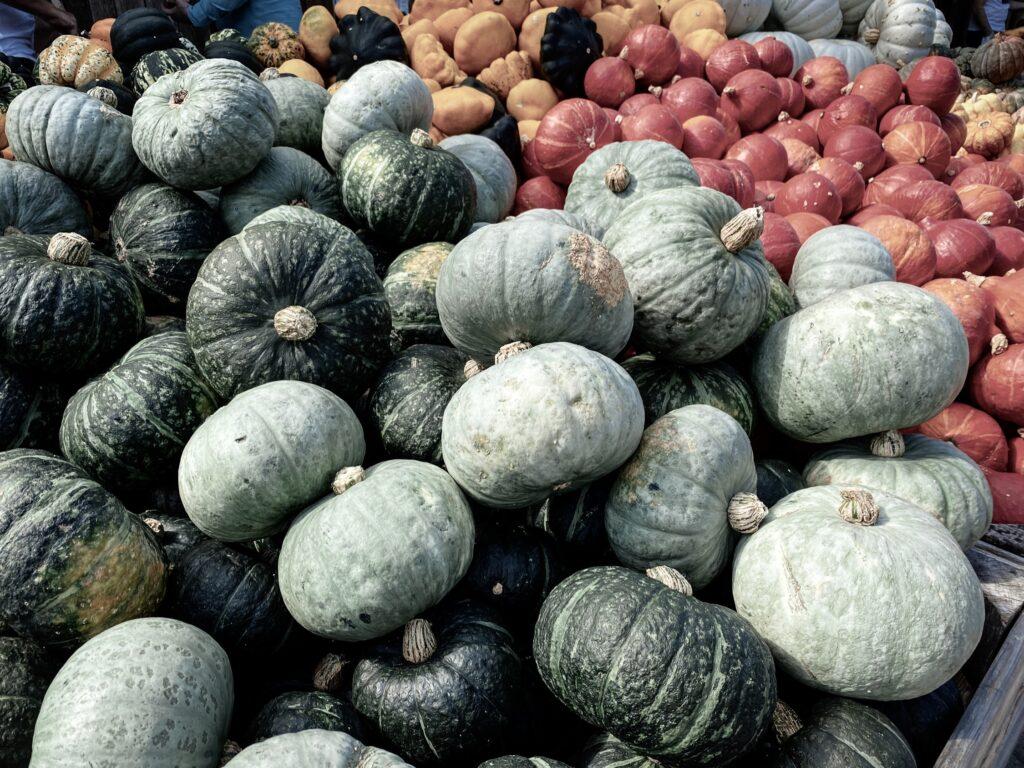 Pumpkins at the Jucker Farm